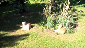 The cats in the sun